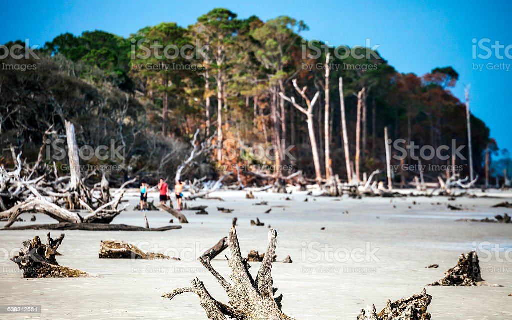 Driftwood beach, Jekyll Island, Georgia. stock photo