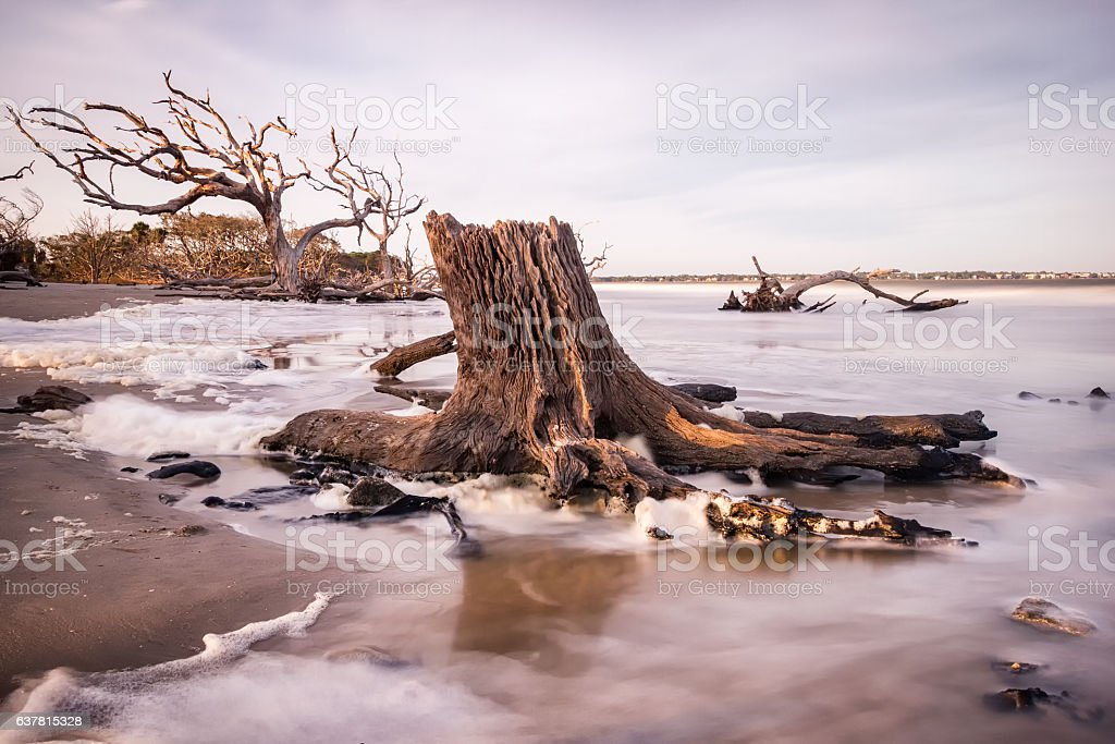 Driftwood Beach stock photo