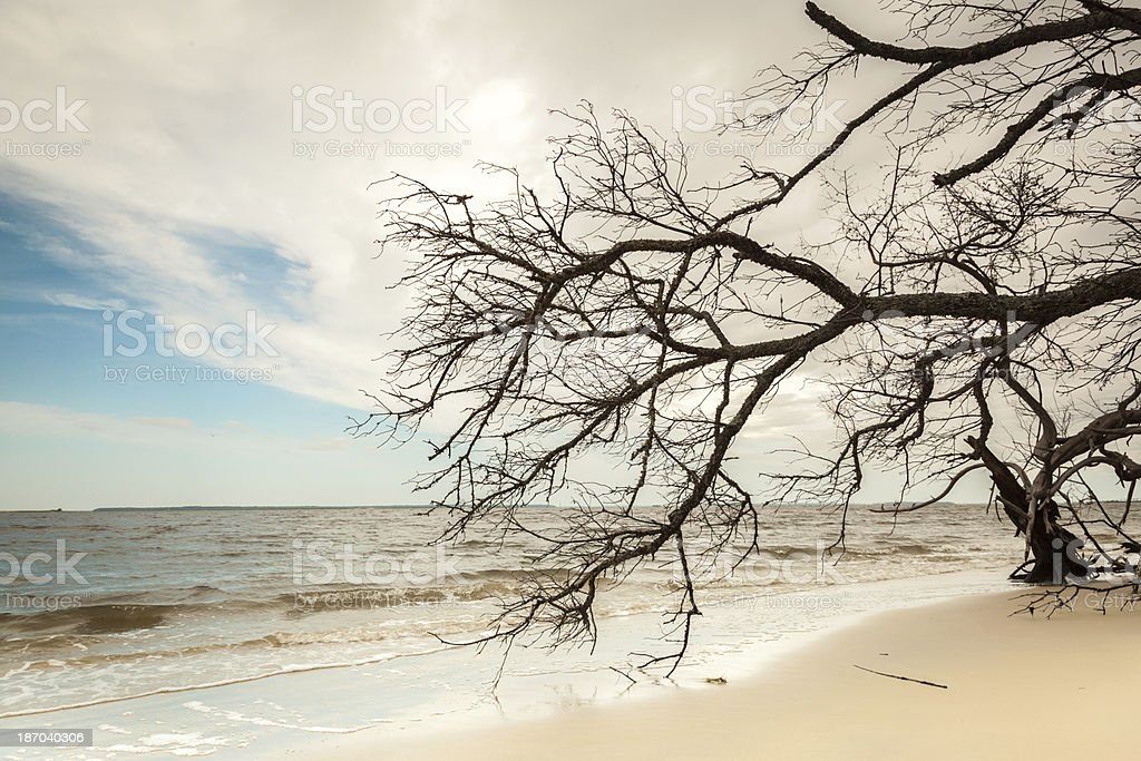 Driftwood Branches royalty-free stock photo