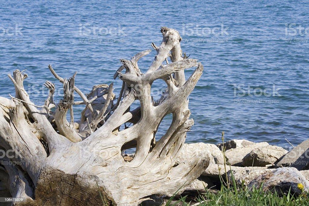 Driftwood by Lake Ontario stock photo