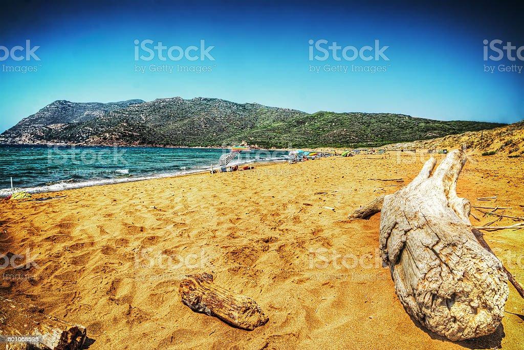 driftwood by the shore in Porto Ferro stock photo