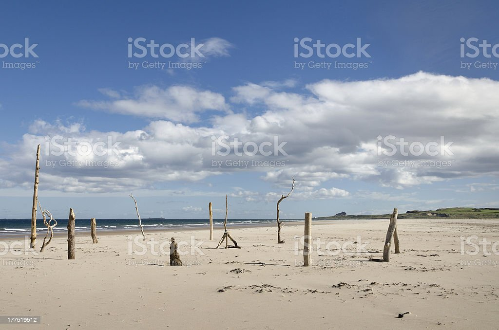 Driftwood circle on beach royalty-free stock photo