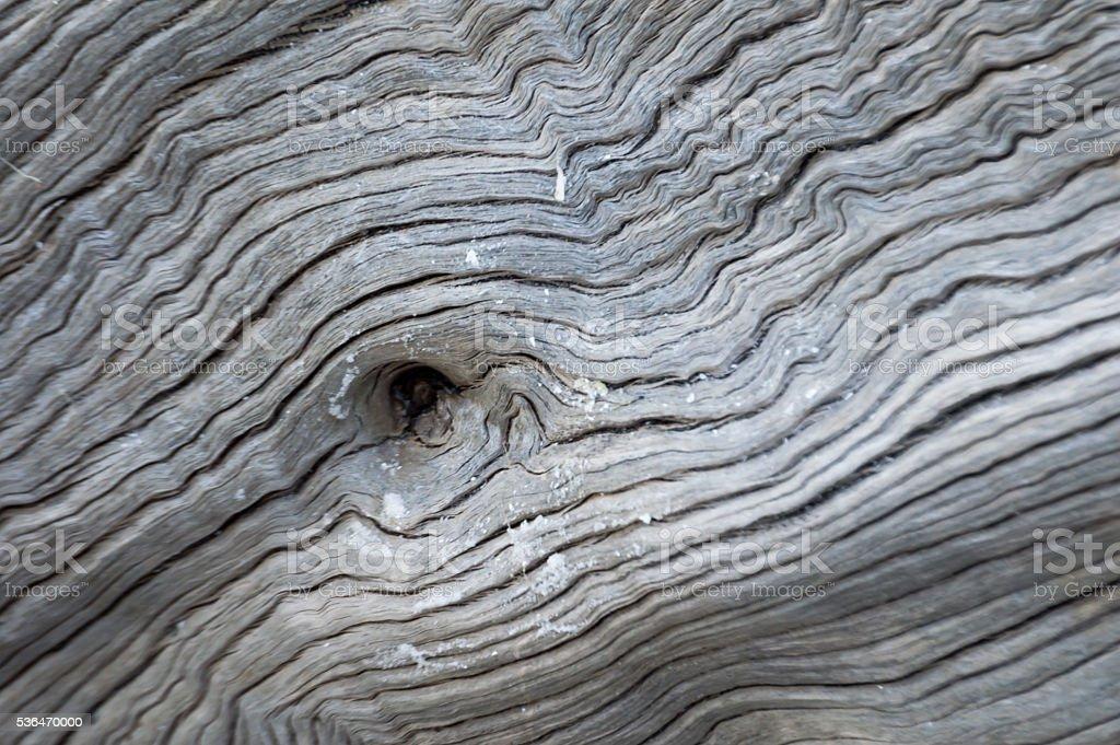 Driftwood Close Up 'Eye' stock photo