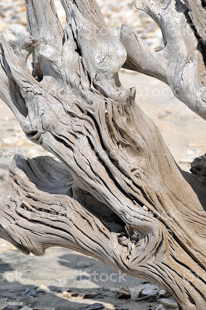 Driftwood Close Up royalty-free stock photo