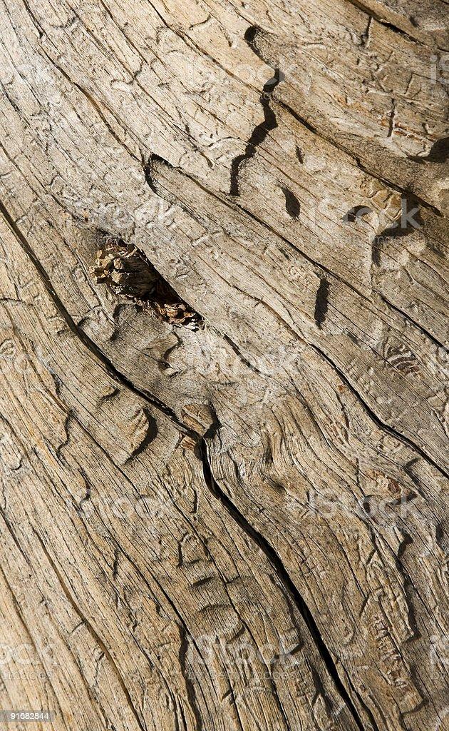 Driftwood Eye royalty-free stock photo
