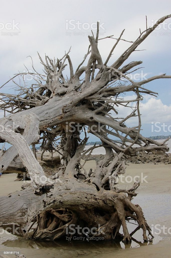 Driftwood II royalty-free stock photo