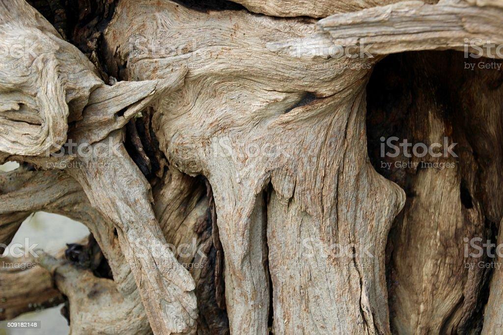 Driftwood III royalty-free stock photo