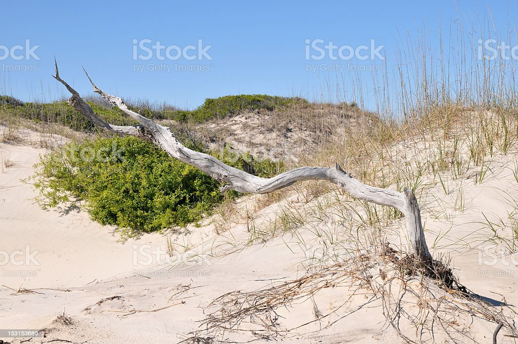 Driftwood in the Dunes royalty-free stock photo
