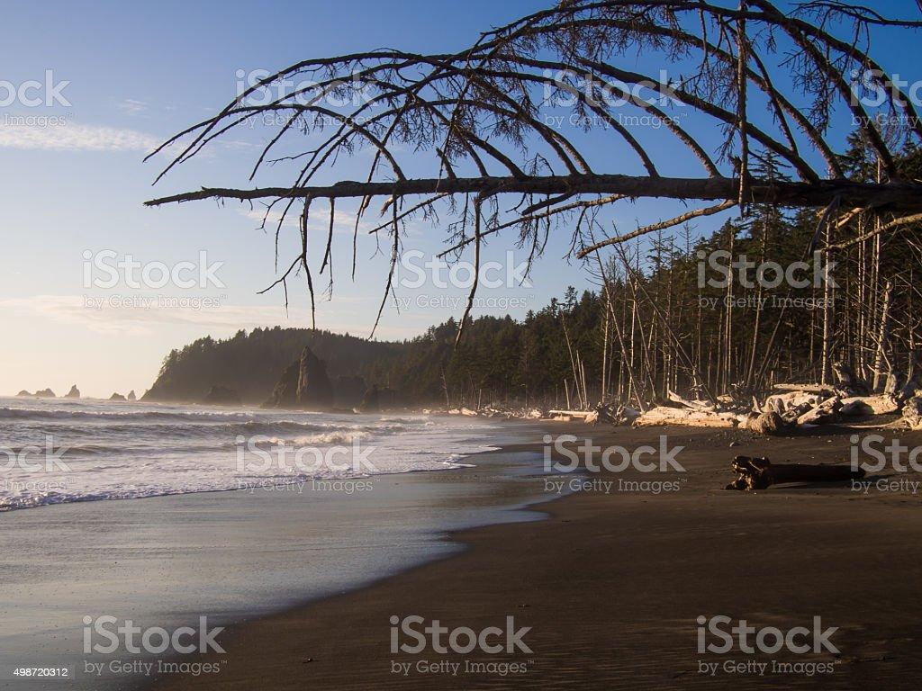 Driftwood Lines Rialto Beach stock photo