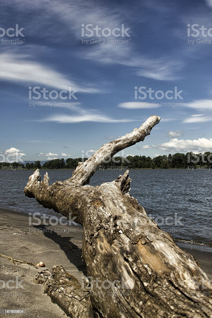 Driftwood / Log along the Columbia River stock photo