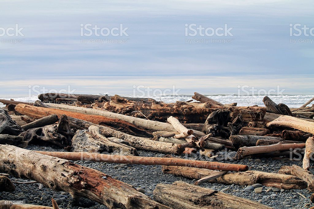 Driftwood Logs Covering a Beach stock photo
