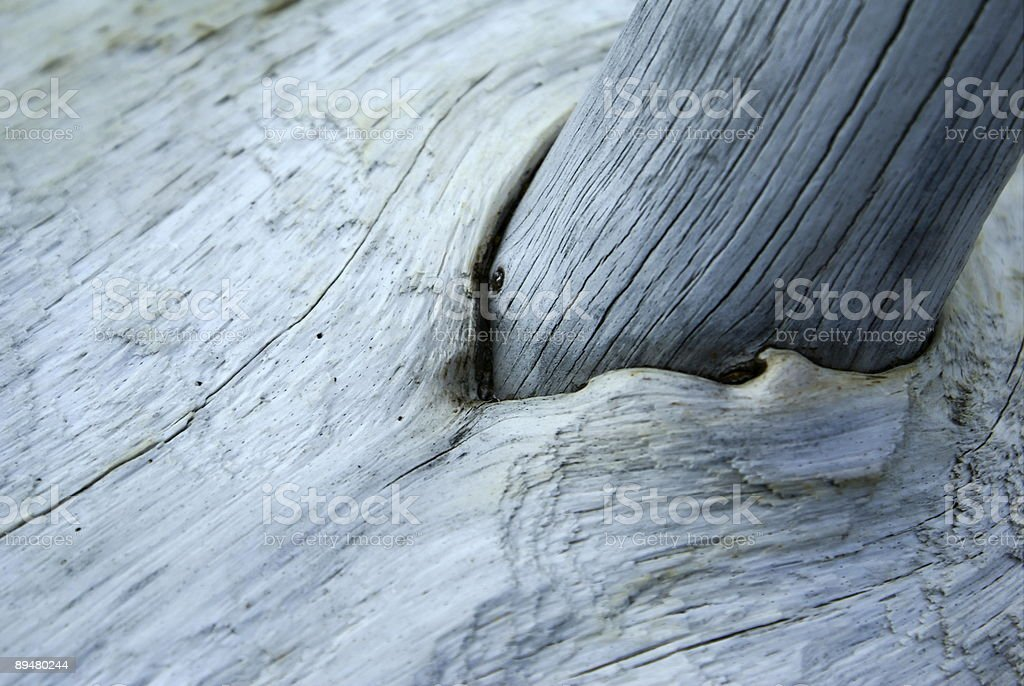 Driftwood Macro royalty-free stock photo