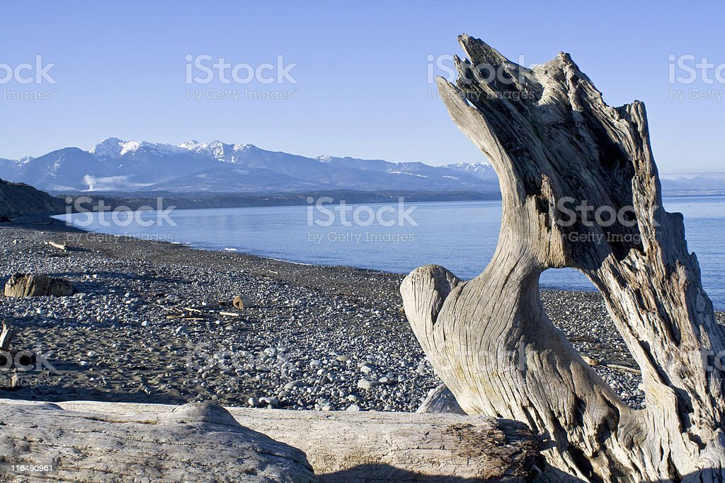 Driftwood on a beach with snowy mountains in the distance royalty-free stock photo