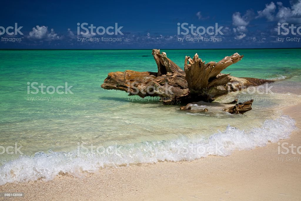 Driftwood on a Caribbean beach with waves breaking stock photo