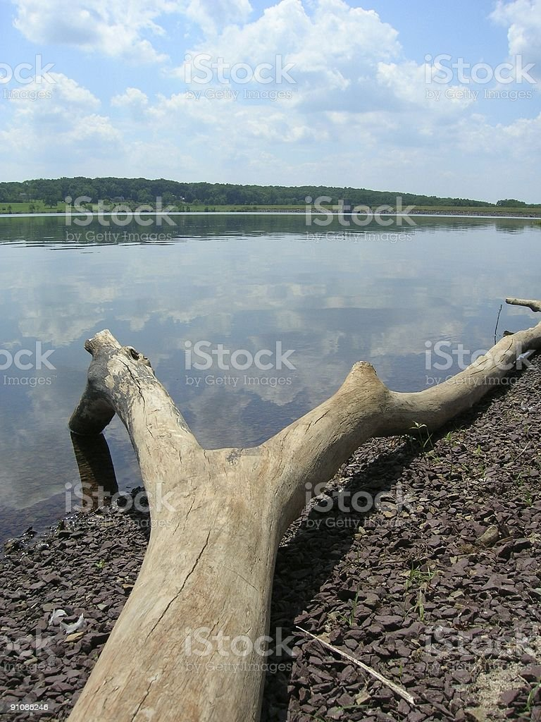 Driftwood on a Lakeshore royalty-free stock photo