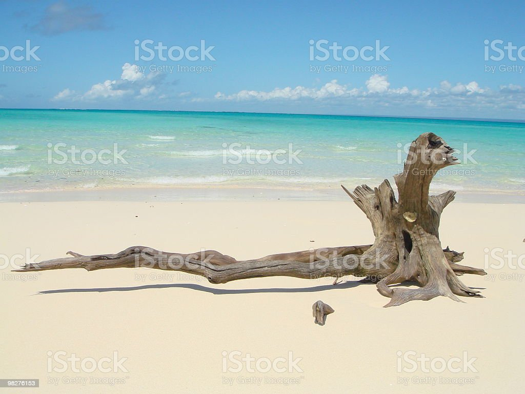 Driftwood on a lonley white sand beach of dreams stock photo