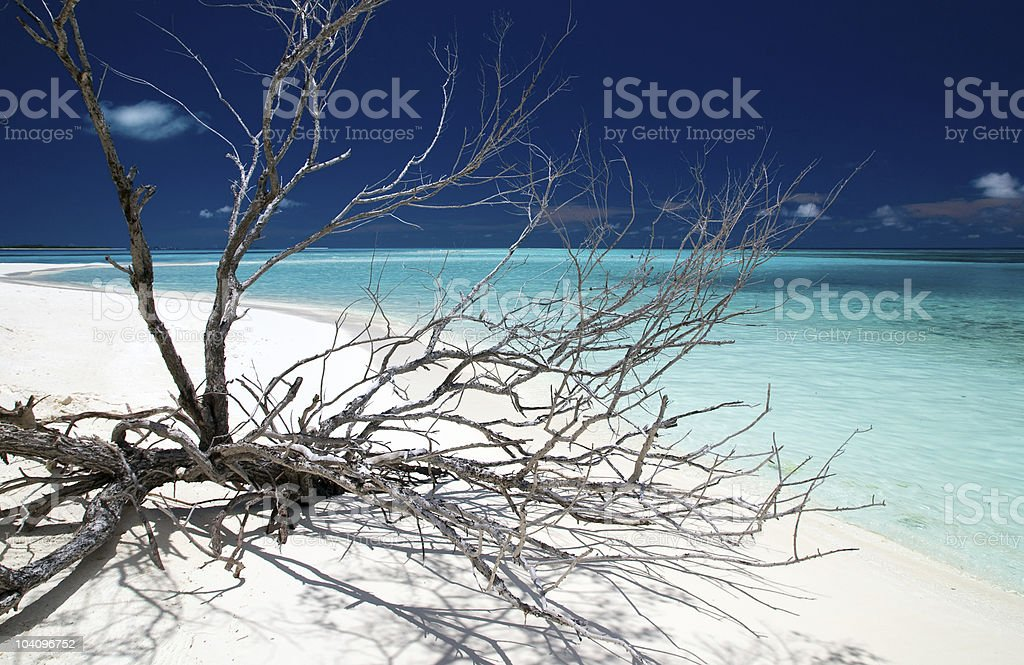 driftwood on a tropical beach royalty-free stock photo