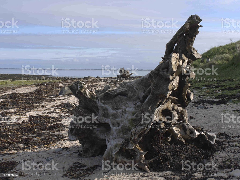 Driftwood on Beach stock photo