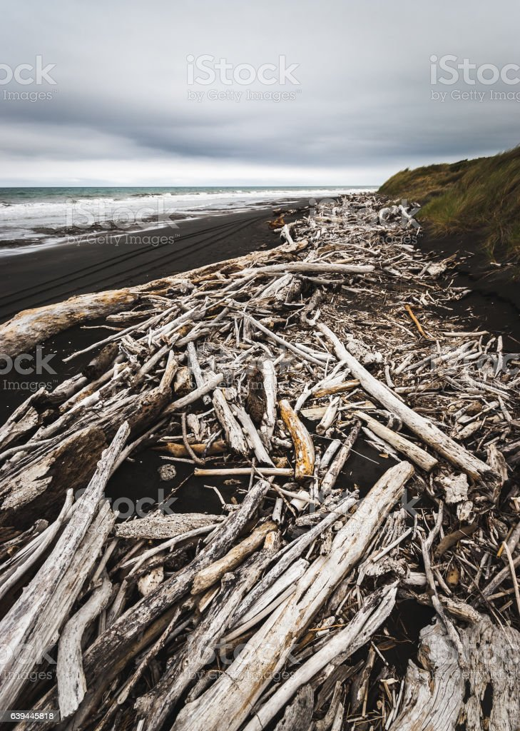 Driftwood on black sand, New Zealand stock photo