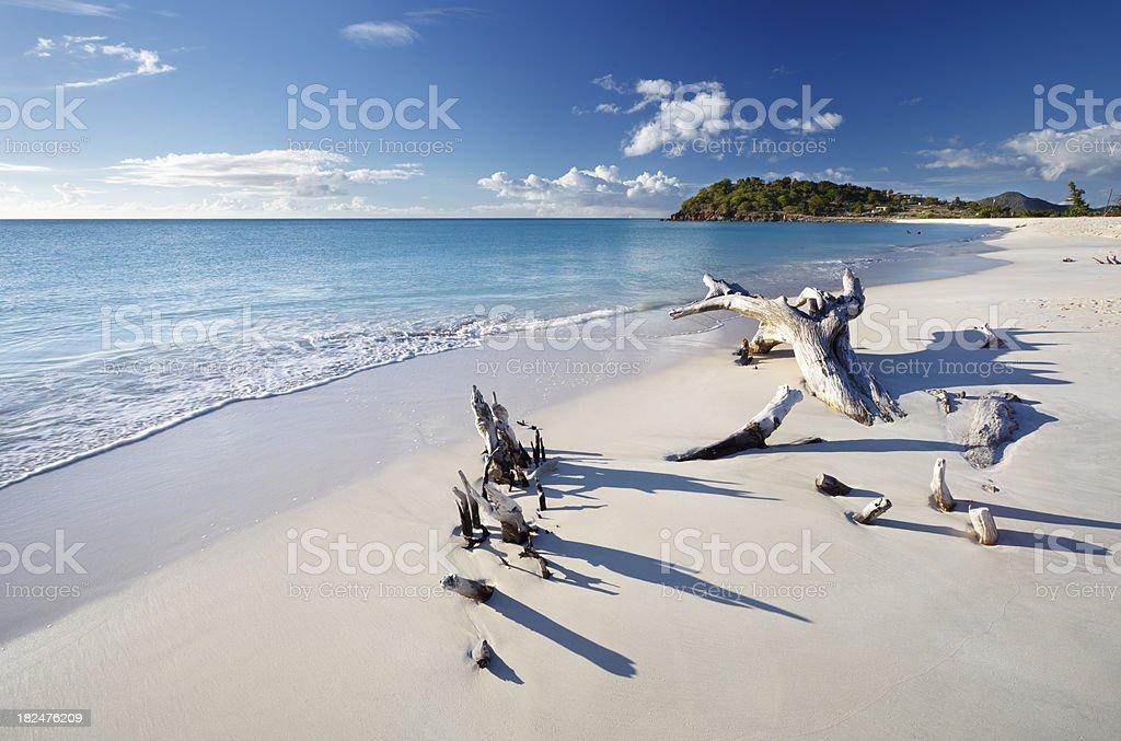 Driftwood On Caribbean Beach stock photo