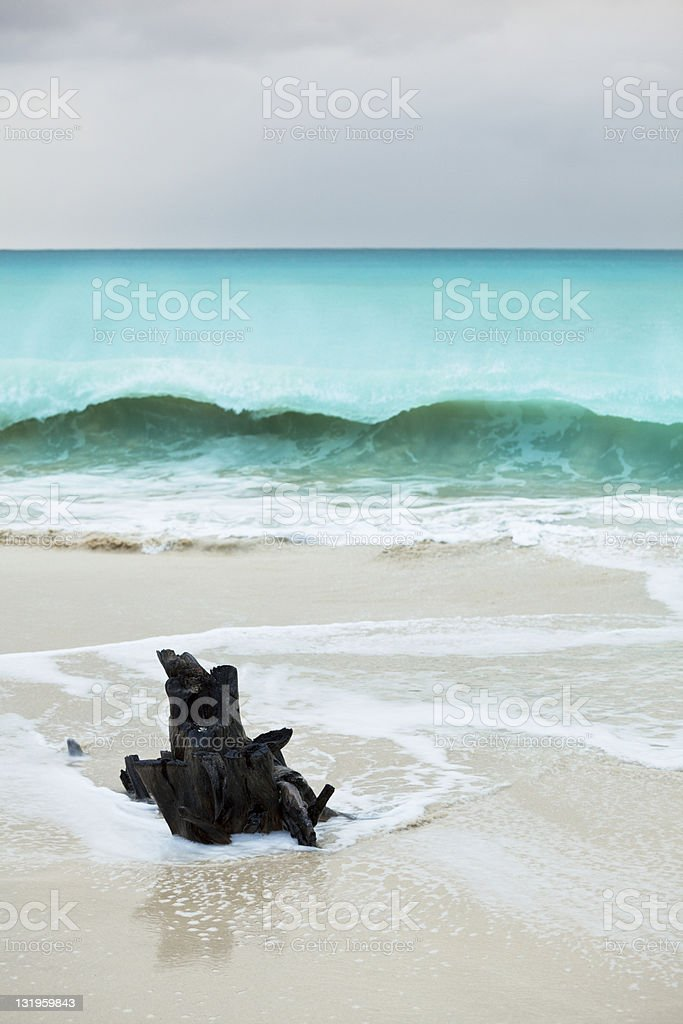 Driftwood On Caribbean Beach With Tall Breaking Wave stock photo