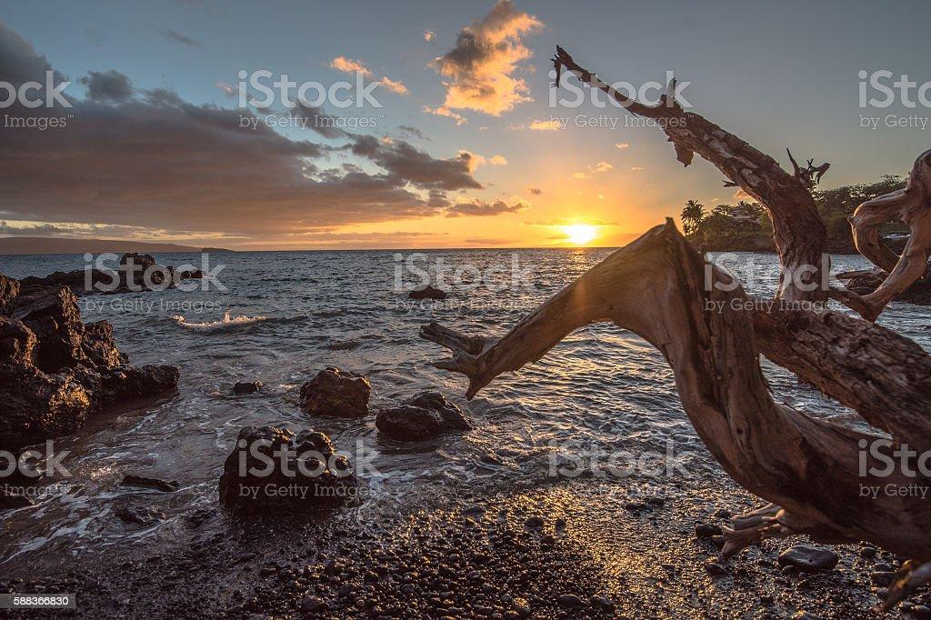 Driftwood on Maui Black Sand Beach at Sunset stock photo