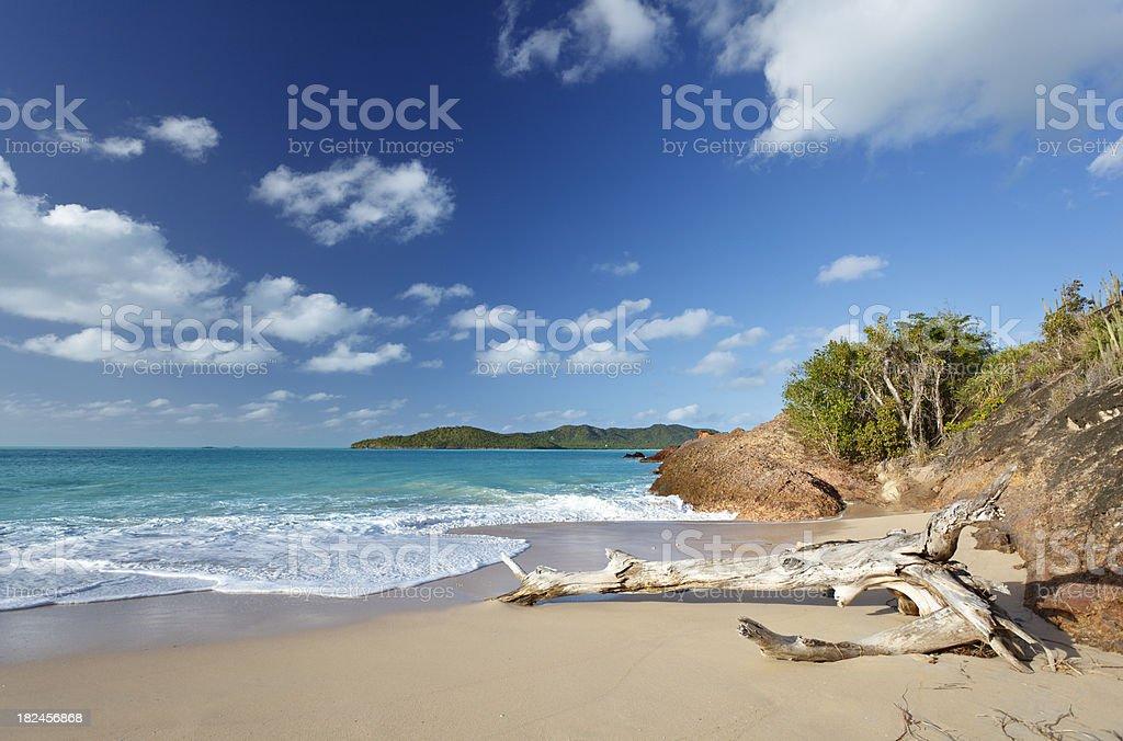 Driftwood On Pristine Caribbean Beach royalty-free stock photo