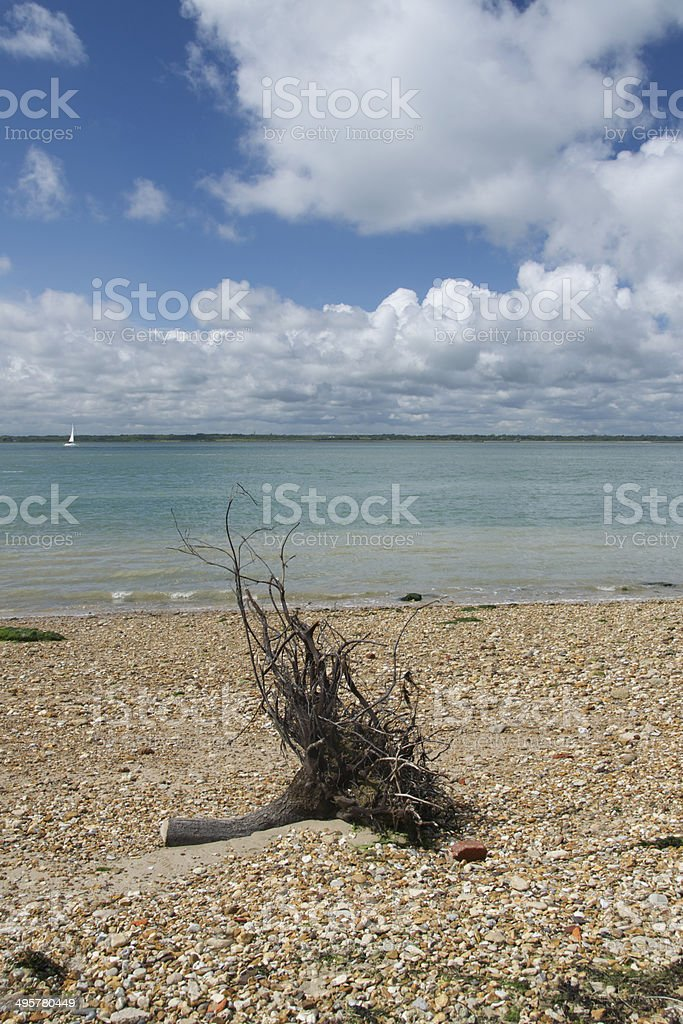 Driftwood on the beach at Fort Victoria overlooking the Solent stock photo