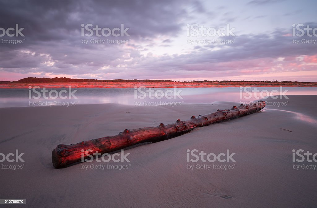 Driftwood on the beach at sunset stock photo