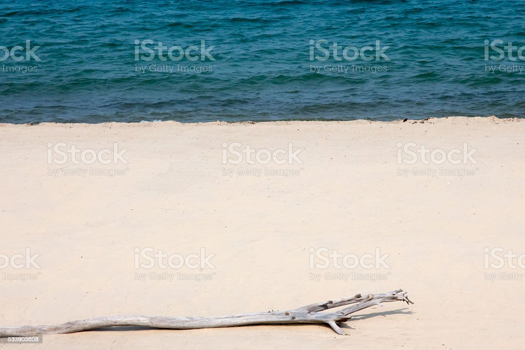 Driftwood on the beach in Placencia, Belize stock photo
