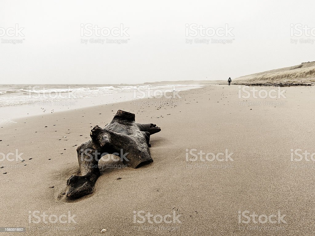 Driftwood on the beach stock photo