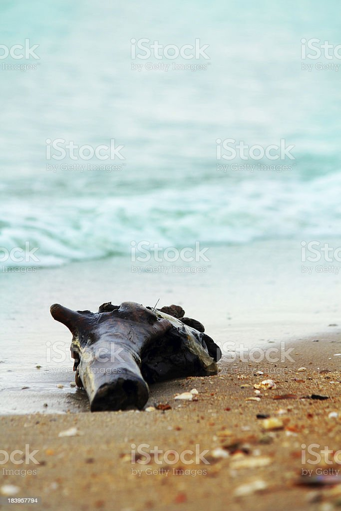 Driftwood on the beach royalty-free stock photo