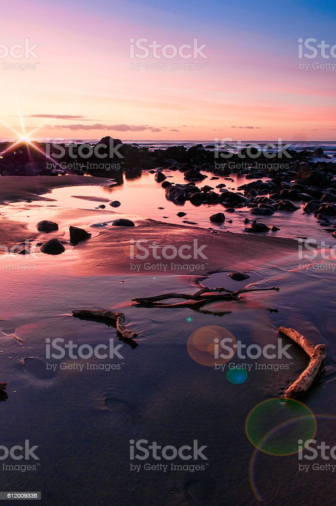Driftwood on the beach with flare stock photo