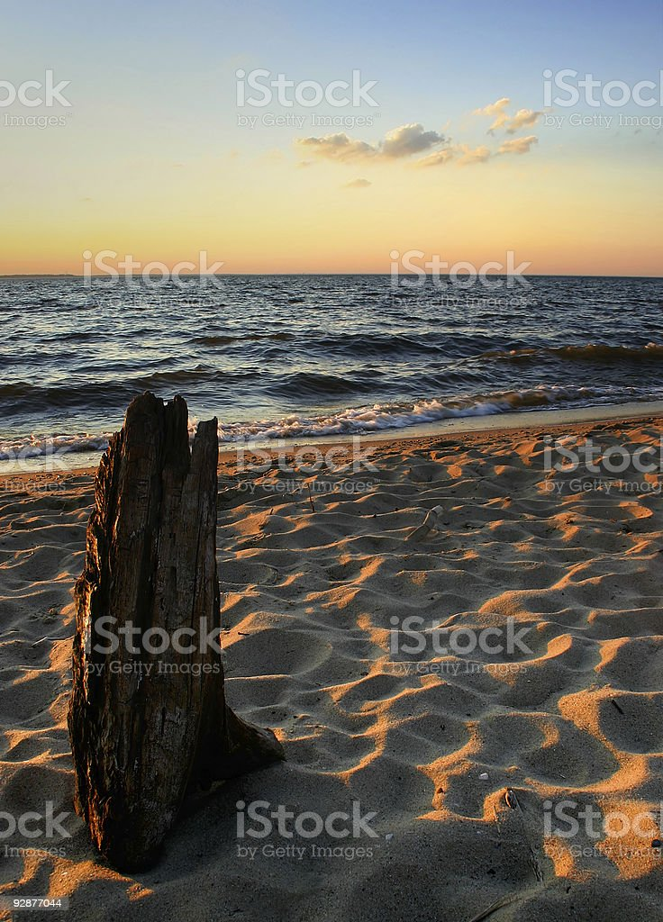 Driftwood on the Chesapeake royalty-free stock photo