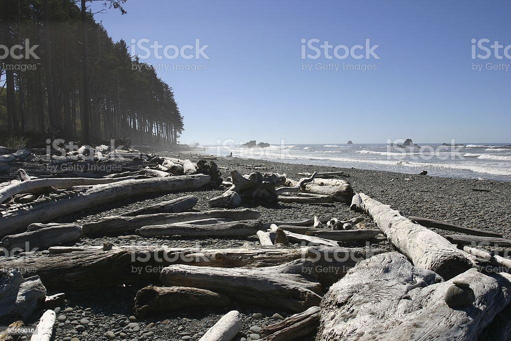 Driftwood on Washington Beach royalty-free stock photo