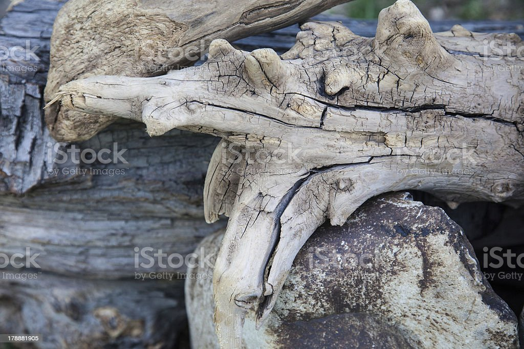 Driftwood Patterns royalty-free stock photo