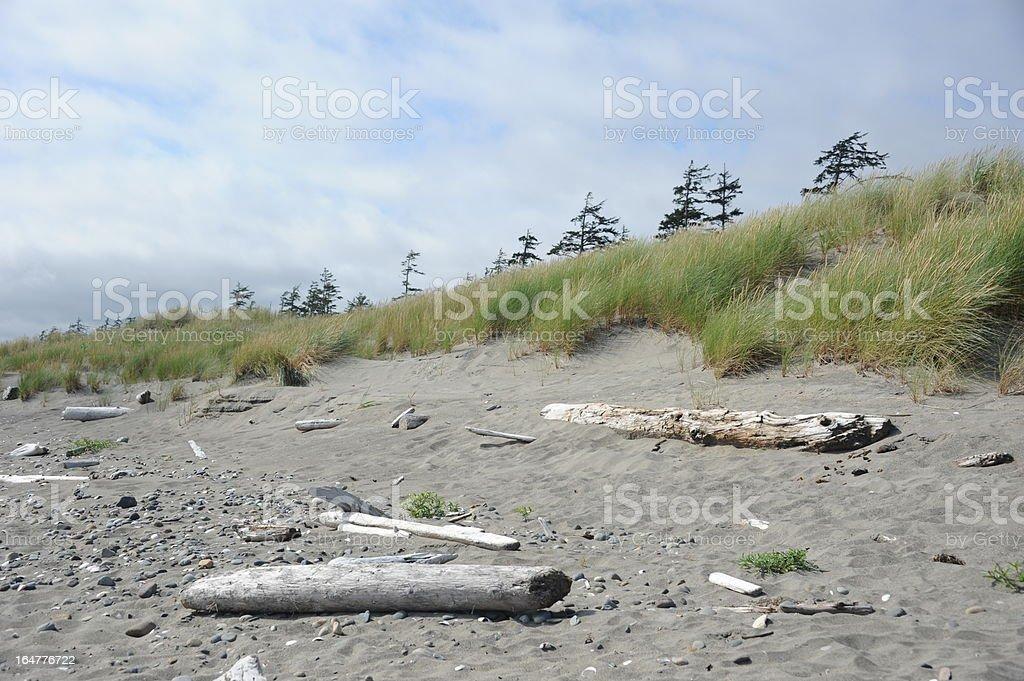 Driftwood royalty-free stock photo