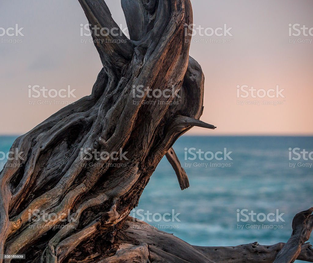 Driftwood stock photo