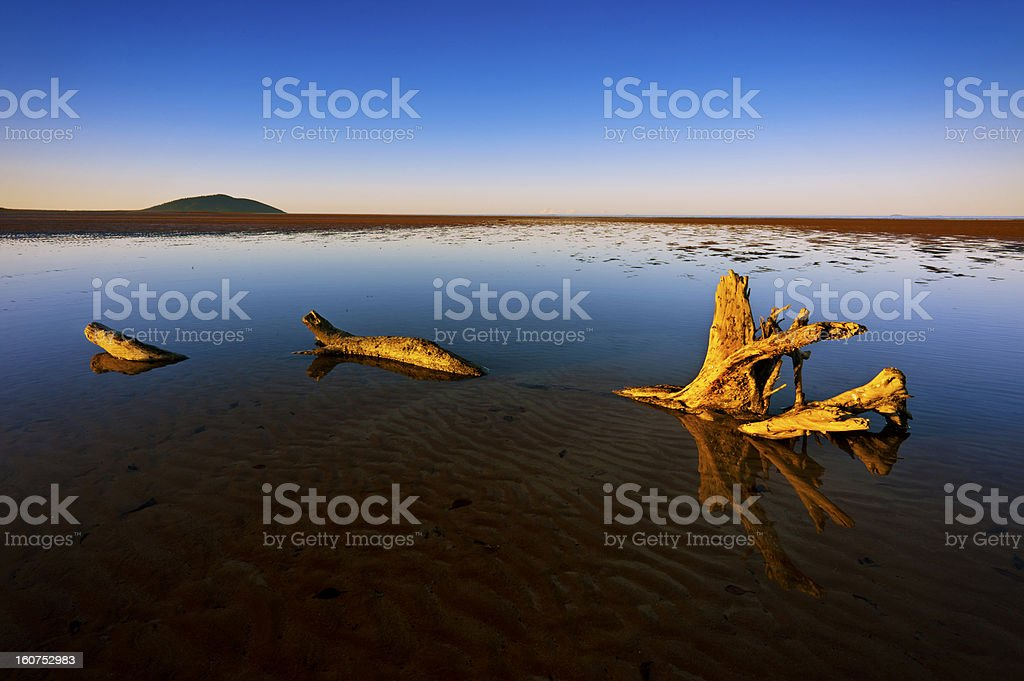 Driftwood Reflections royalty-free stock photo