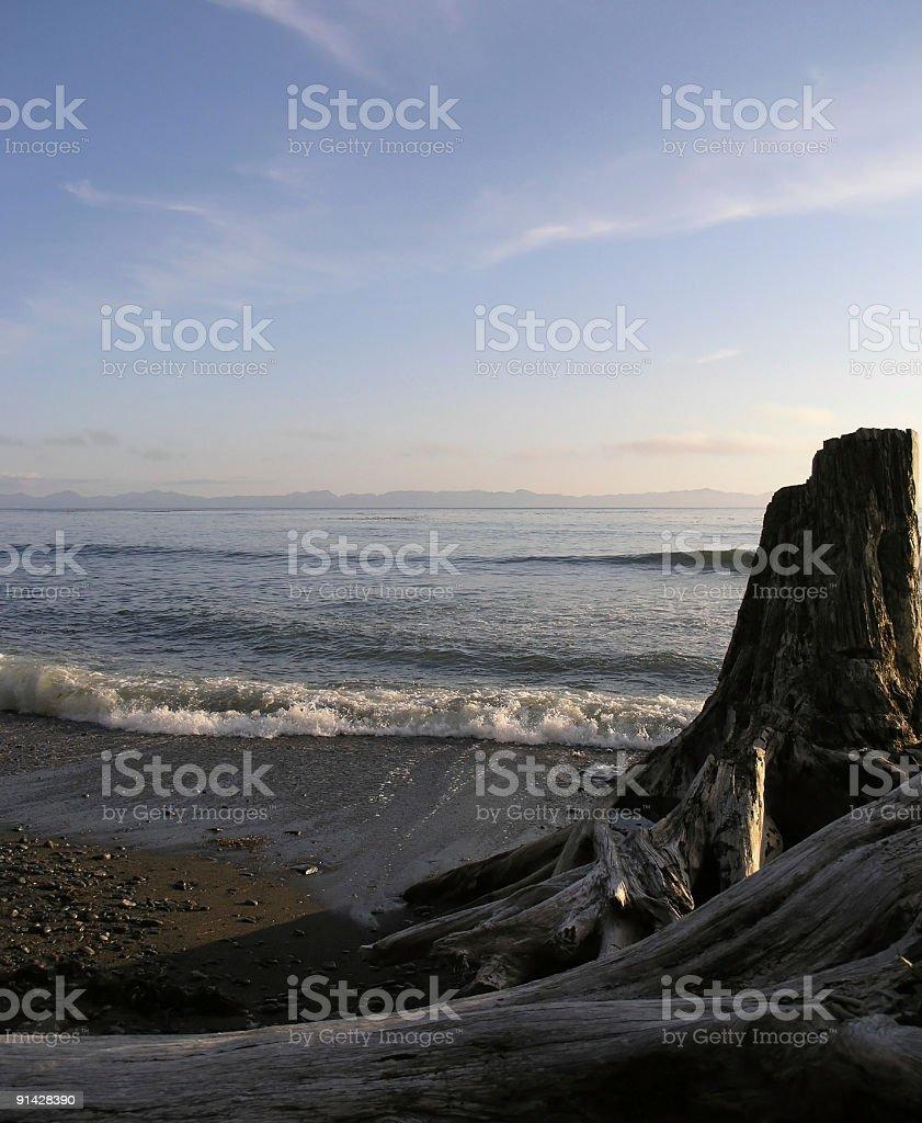Driftwood Shore royalty-free stock photo