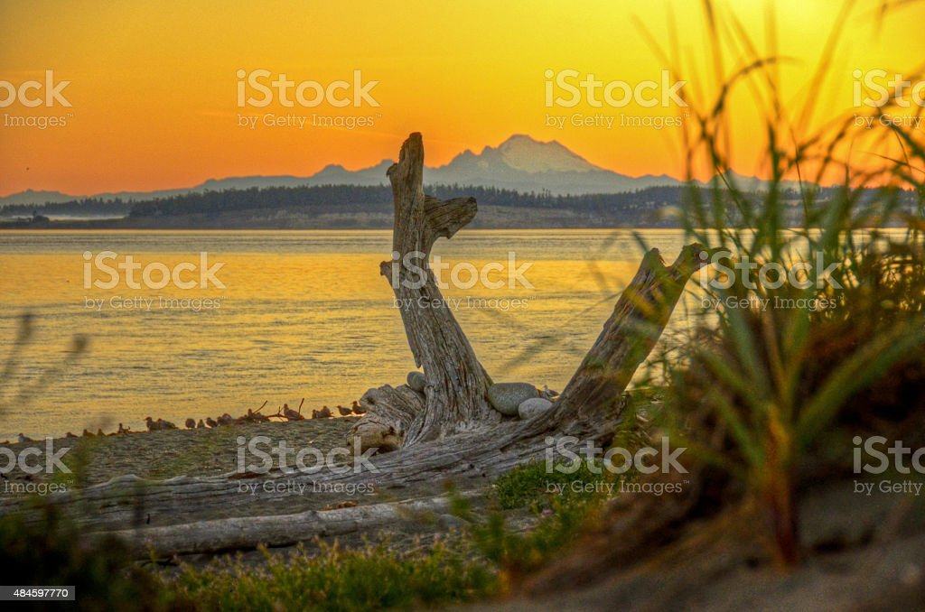 Сплавной лесоматериал Sunrise Стоковые фото Стоковая фотография