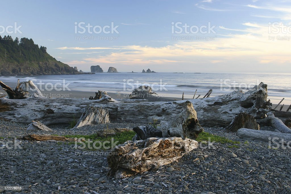 Driftwoods on 1st Beach royalty-free stock photo