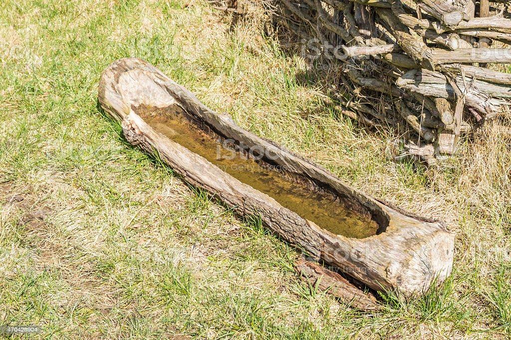 Drinking log stock photo
