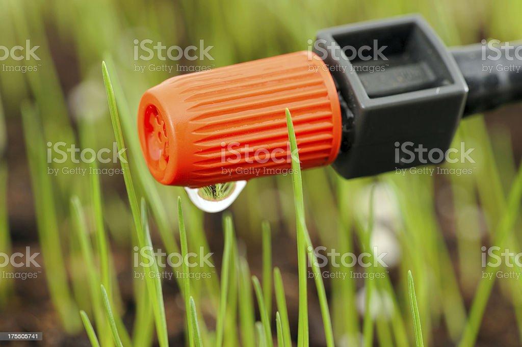 Drip Irrigation Detail stock photo