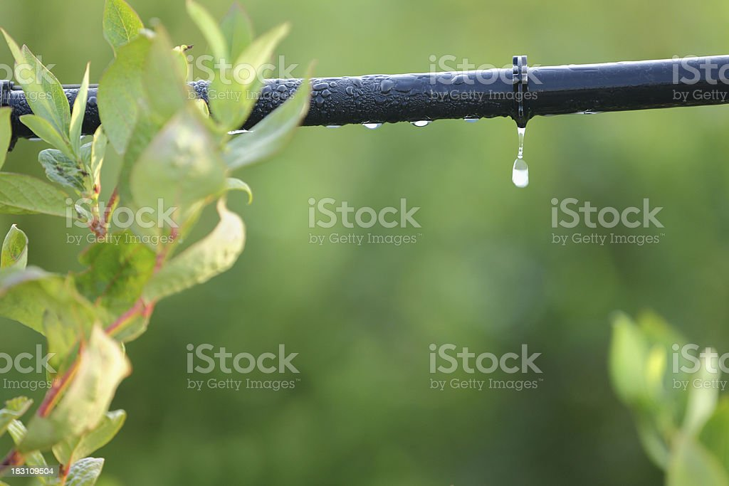 Drip Irrigation System Close Up stock photo