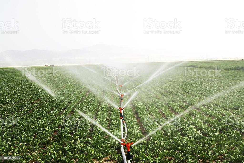 drip irrigation systems stock photo