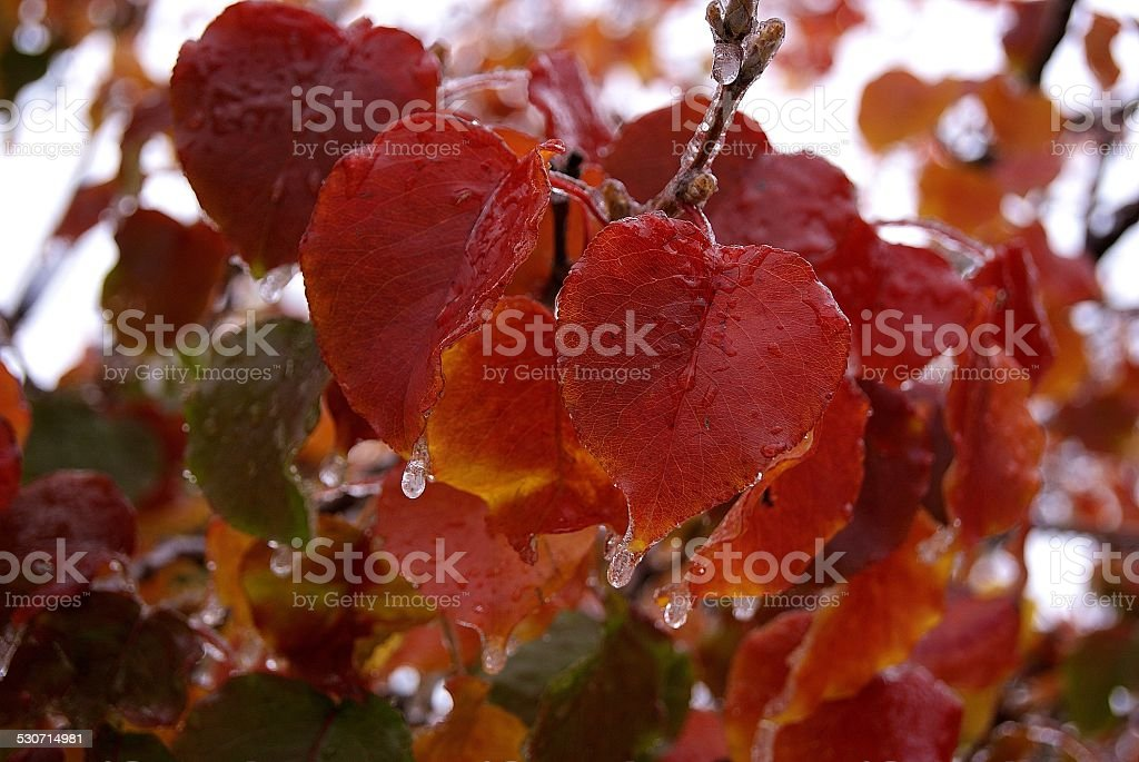 Dripping Points royalty-free stock photo