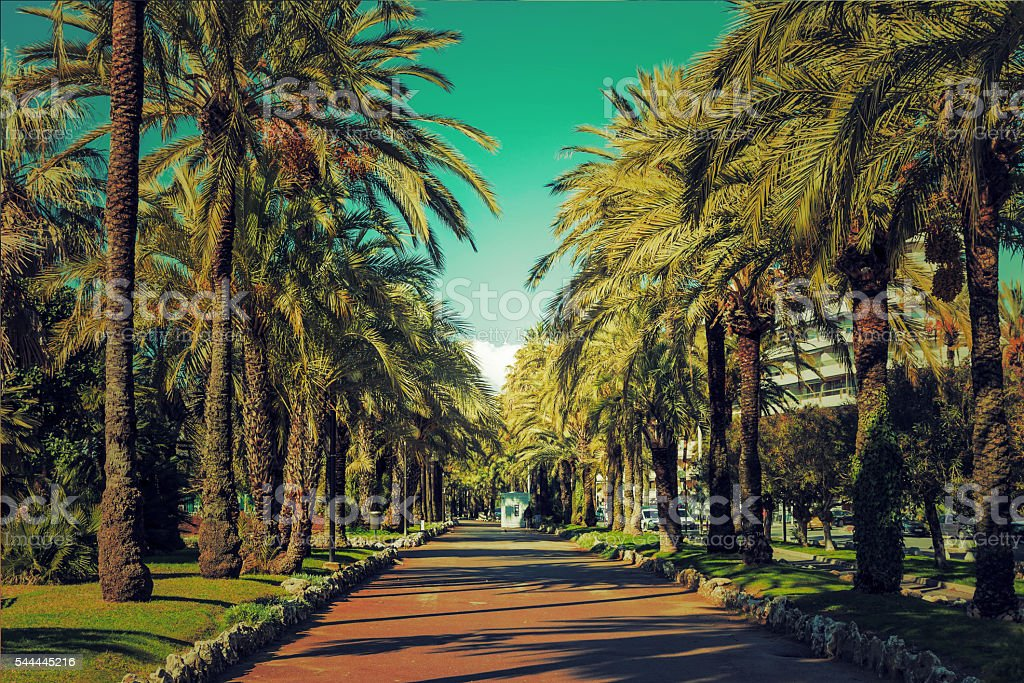 Driveway of palm trees on the Croisette in Cannes stock photo