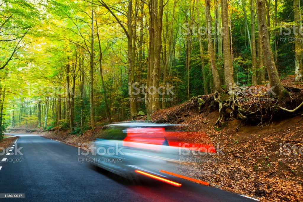 Driving in beautiful forest royalty-free stock photo