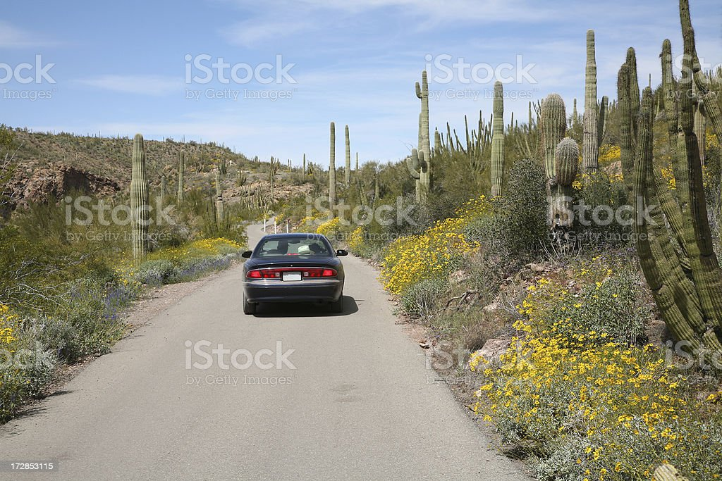 Driving Through The Organ Pipe Cactus National Monument stock photo